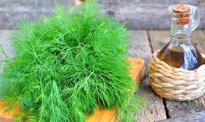 The chemical composition of dill oil